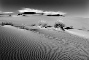 Evening on Eel Creek Dune, Oregon.jpg