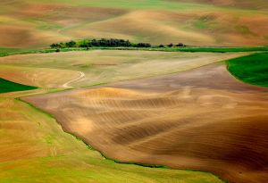 c80-Palouse Abstract.jpg