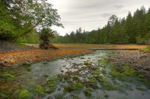Haida Gwaii Inland River