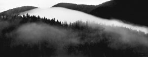 bw fog on hillside copy.jpg