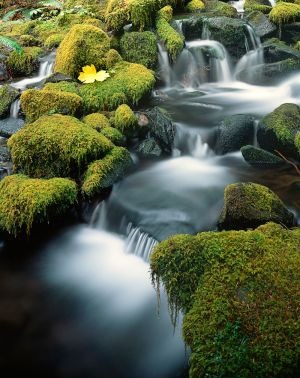 Mossy Creek, Sol Duc, Olympic Nation Park