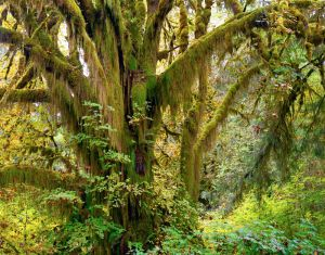 Queets Ent, Olympic National Park