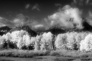 Infra red Aspens